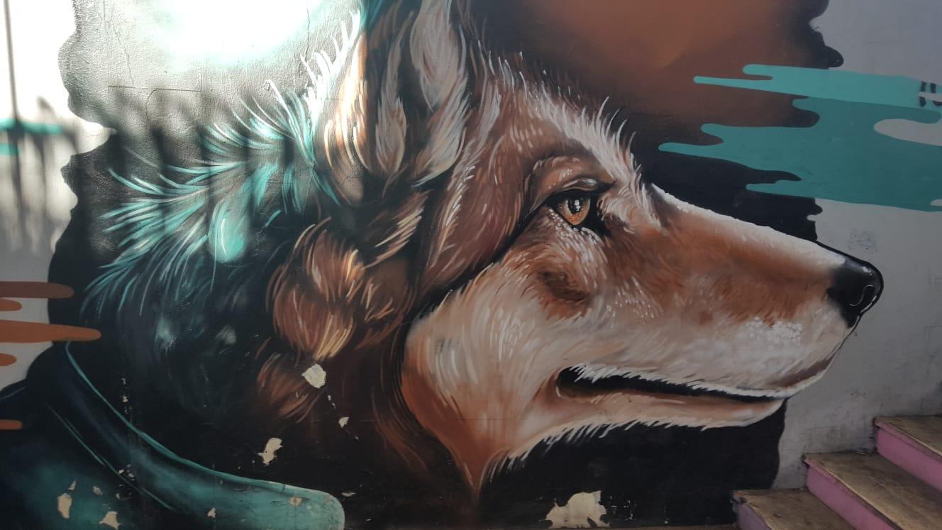 Il lupo e l'uomo